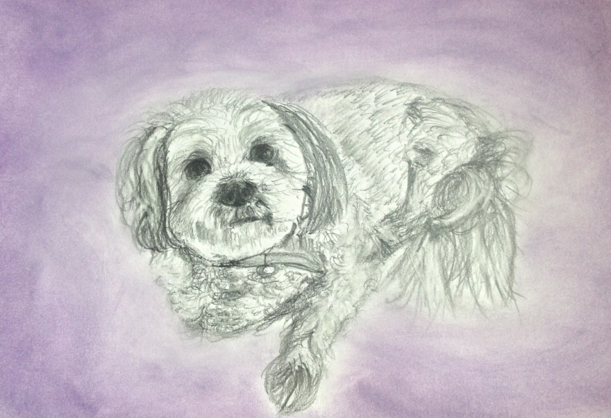 I did this drawing of Luke's aunty's dog for her as a 70th birthday present.